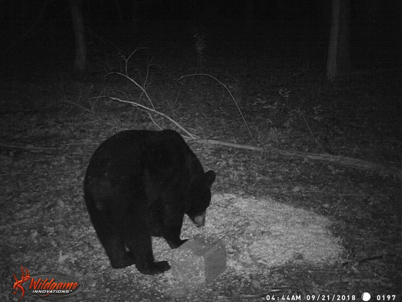 018 bear camera check 2.JPG