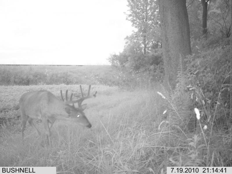 Click image for larger version.  Name:ants-in-trail-cam_1024x1024.jpg Views:0 Size:120.2 KB ID:54386