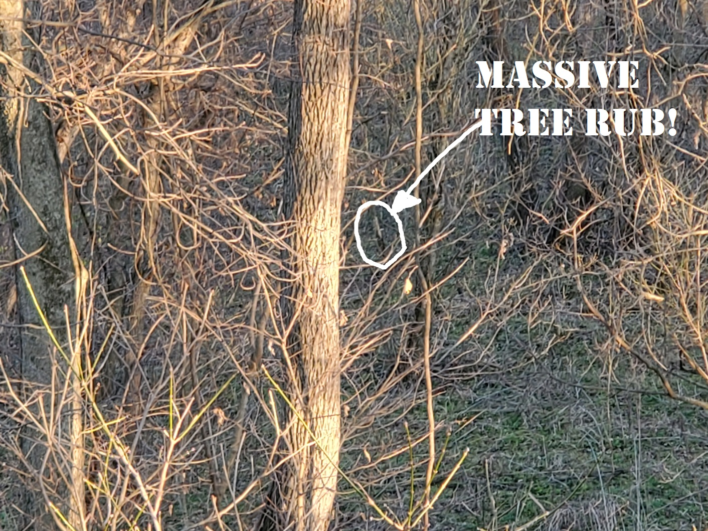 20191207_162718 Massive tree rub.jpg