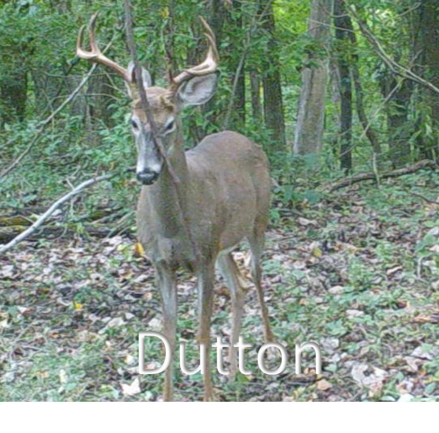 Dutton1.jpg