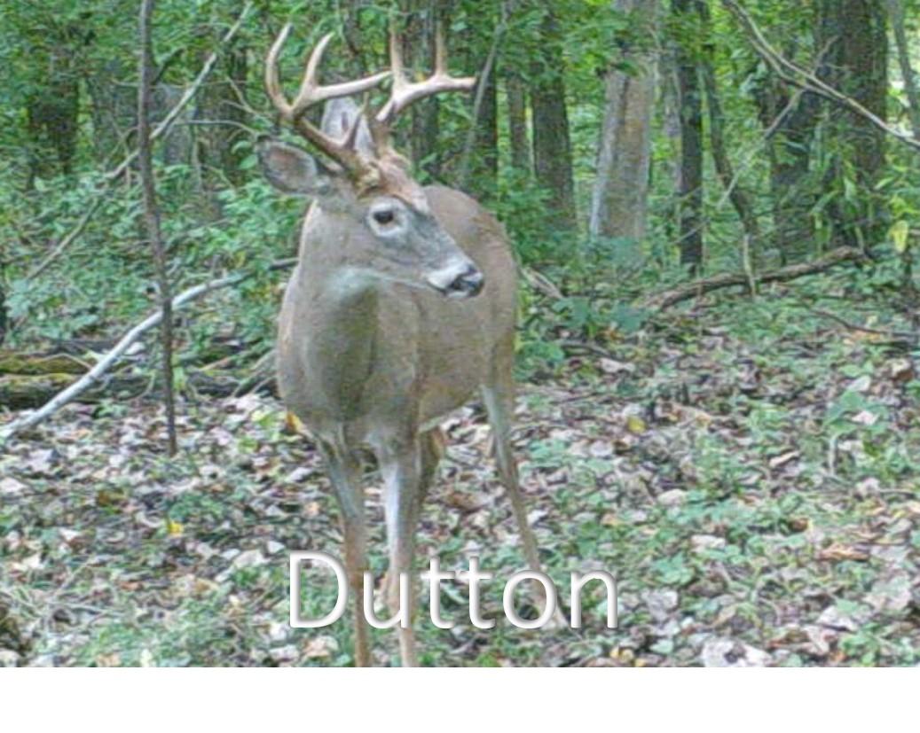 Dutton2.jpg