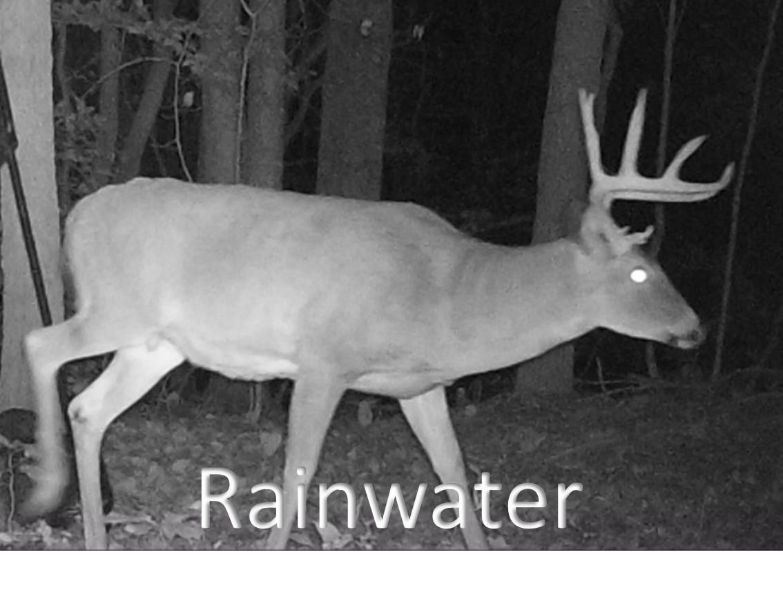 Raainwater1.jpg