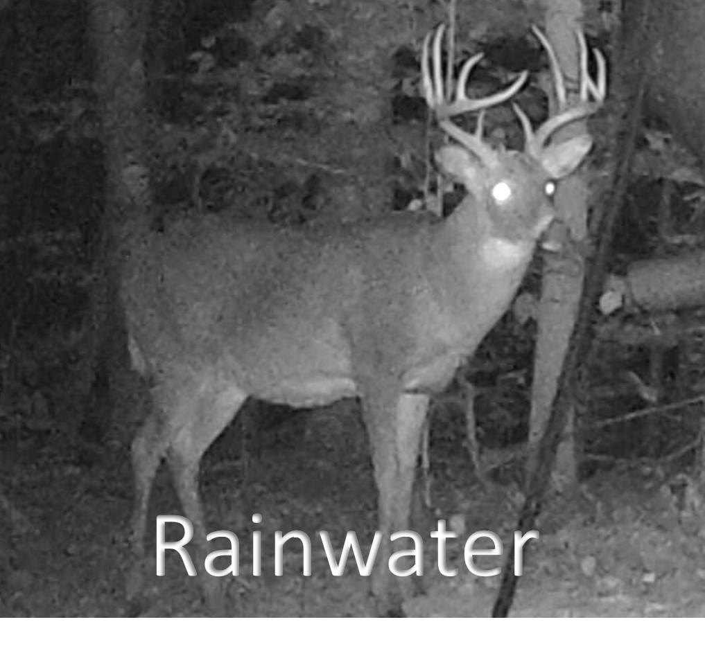 Raainwater2.jpg