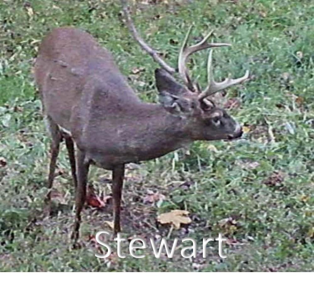 Stewart1.jpg