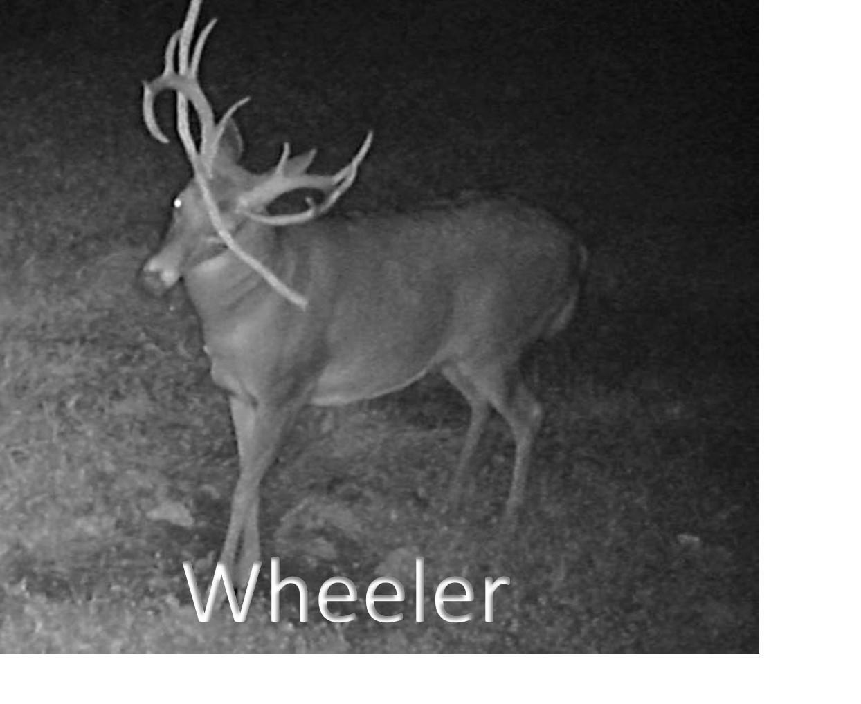Wheeler1.jpg