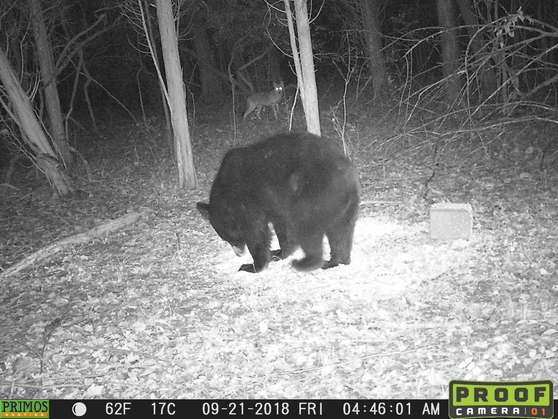 yote bear.JPG