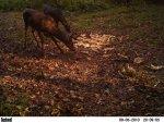 deer 479.jpg
