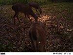 deer 488.jpg
