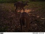 deer 491.jpg