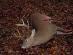 DSCN3269 December 08 buck down.jpg