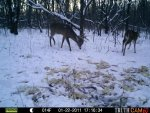 Bucks Behind house 613.jpg