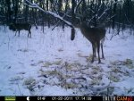 Bucks Behind house 611.jpg