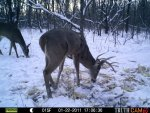 Bucks Behind house 605.jpg