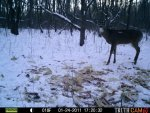 Bucks Behind house 820.jpg