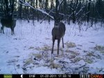 Bucks Behind house 602.jpg