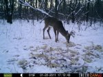 Bucks Behind house 610.jpg