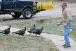 2011 Ohio Wild Turkeys 5.jpg